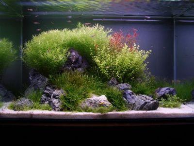 ADA 60p tank with Seiryu-seki stones | Aquascape ...