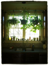 Hang plants in your kitchen window without putting any ...