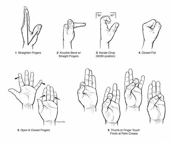 17 Best ideas about Finger Flexion on Pinterest