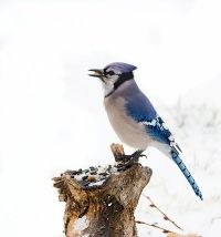 74 best images about Bird of the Air on Pinterest ...
