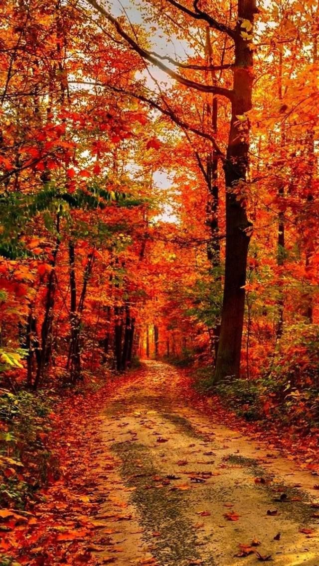 New England Fall Phone Wallpaper 1000 Ideas About Autumn Scenery On Pinterest China