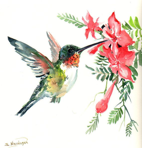 flying hummingbird original watercolor