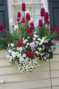 Window box in Charleston | Container gardening | Pinterest