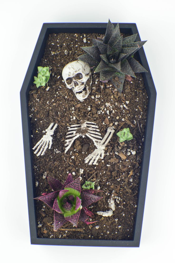 17 Best ideas about Halloween Coffin on Pinterest