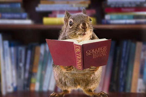 An Educated Squirrel Photograph By Peggy Collins