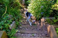 17 Best images about Pet friendly Plants on Pinterest ...