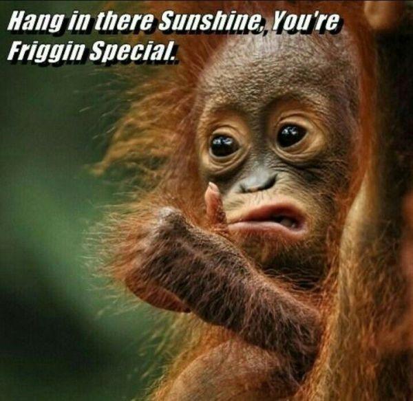 Supportive orangutan Encouragement get well fun