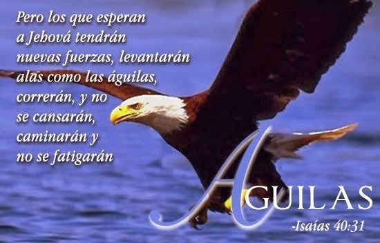 Imagenes De Aguilas Con Mensajes Cristianos Reflexiones