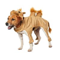 17 Best images about Halloween Pets on Pinterest ...