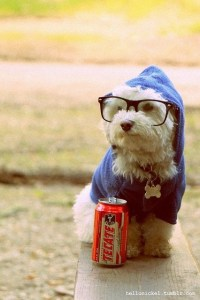 1000+ images about Hipster Dogs on Pinterest | Trotter ...