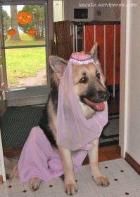 761 best images about German Sheperds GSD on Pinterest ...