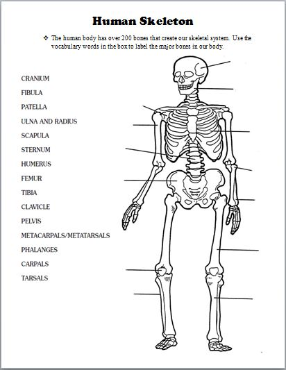 25+ best ideas about Skeletal system activities on