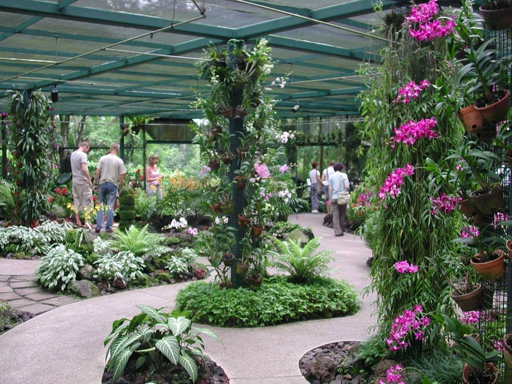 25 Best Images About Orchid Garden On Pinterest Orchids Garden