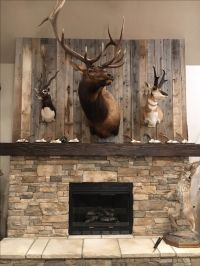 25+ best ideas about Deer Mounts on Pinterest | Deer mount ...