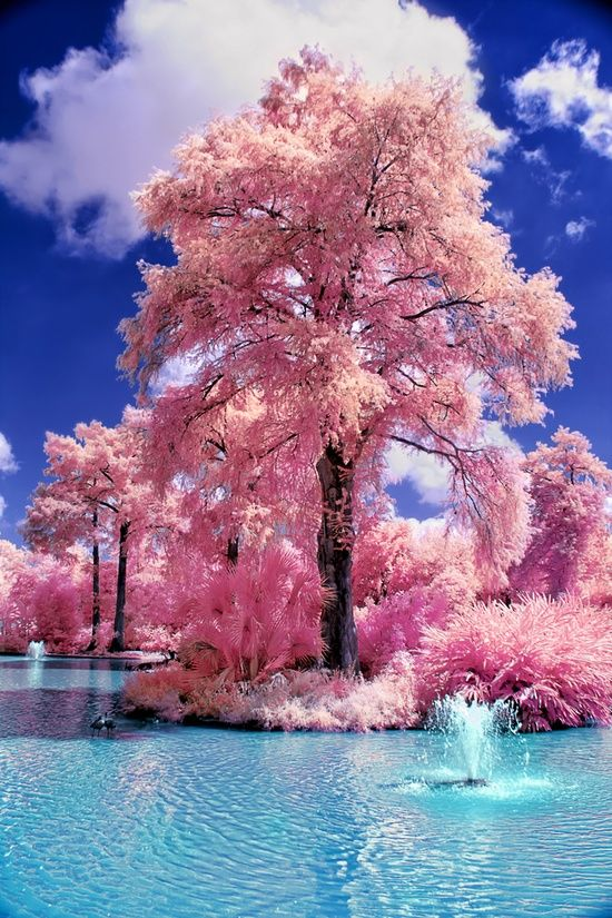 Magical Nature Tour Amazing World