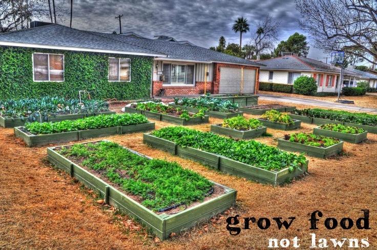 Front Yard In Phoenix Arizonagrow Food Not Lawns
