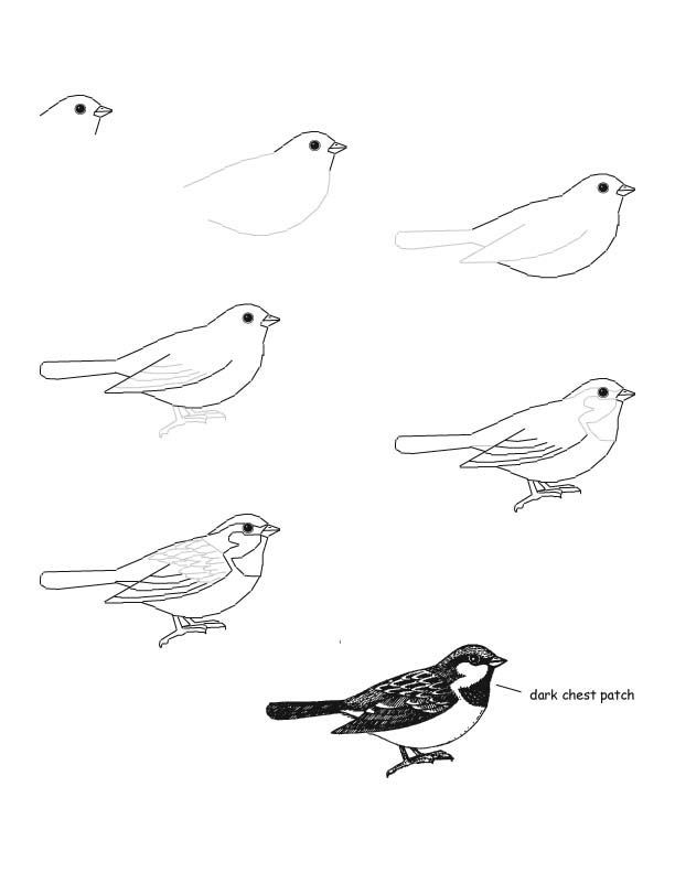 1722 best images about Birds of a feather drawings on
