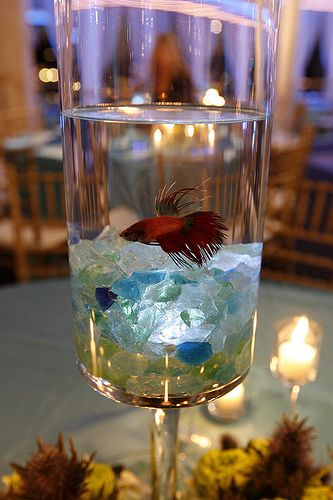 25 Best Ideas About Fish Wedding Centerpieces On