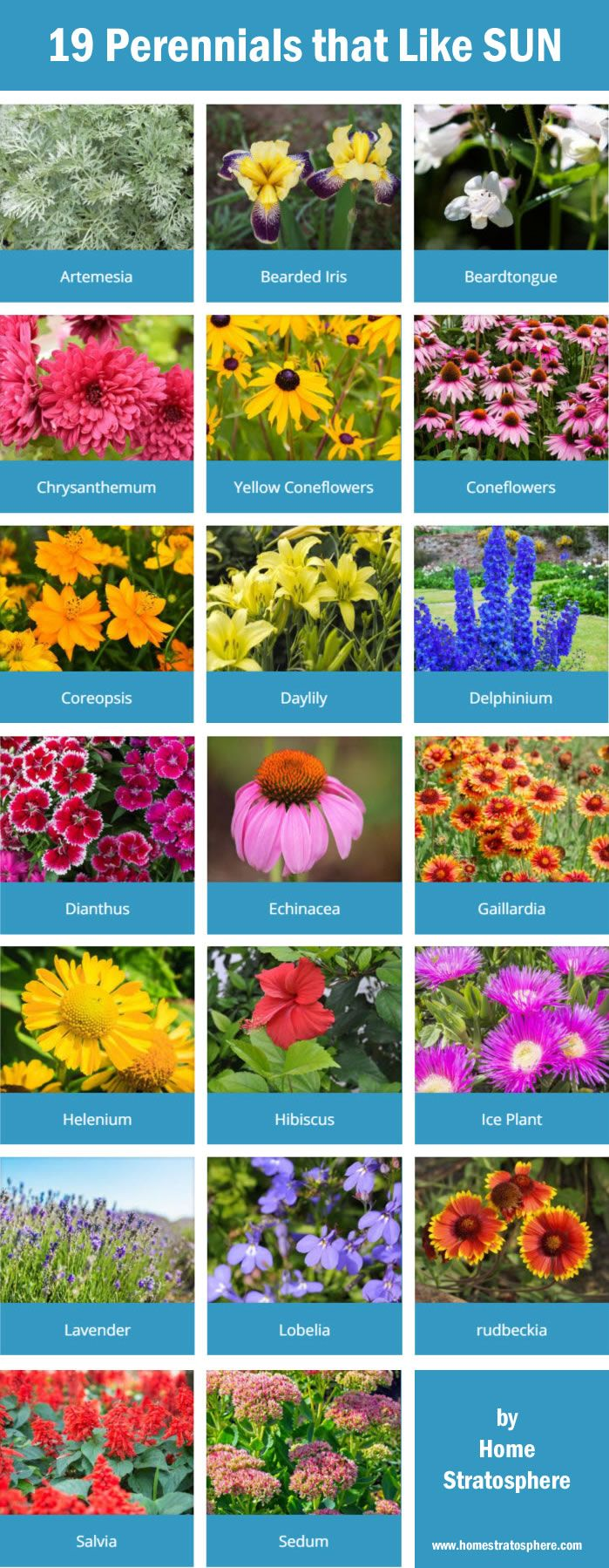 25 Best Ideas About Flowers Garden On Pinterest Flower