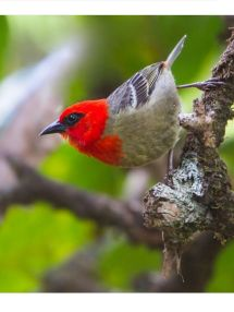 794 best images about BIRDS PLOCEIDAE weaver finches on