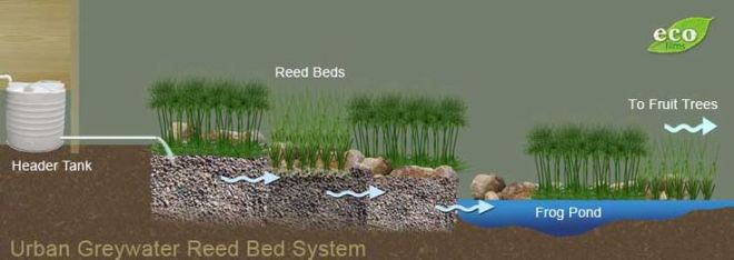 Building an urban greywater reedbed water recycling