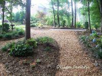 25+ best ideas about Wooded backyard landscape on Pinterest