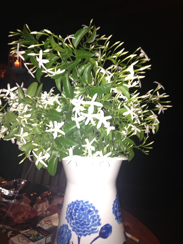 17 Best images about Jasmine arrangement  Jazmin on