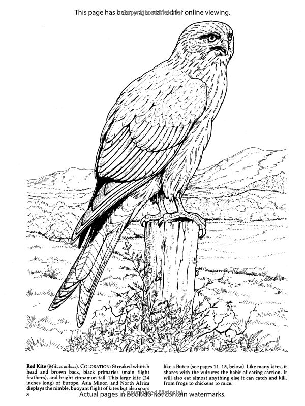 Birds of Prey Coloring Book (Dover Nature Coloring Book