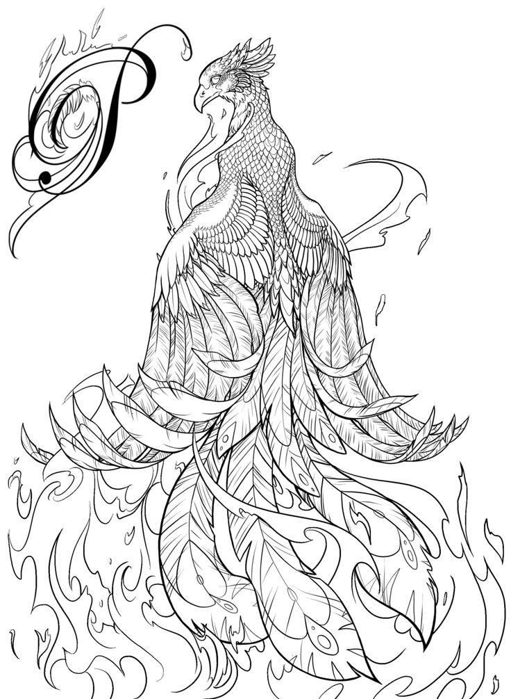 First submission for a 'coloring book for adults'. Phoenix