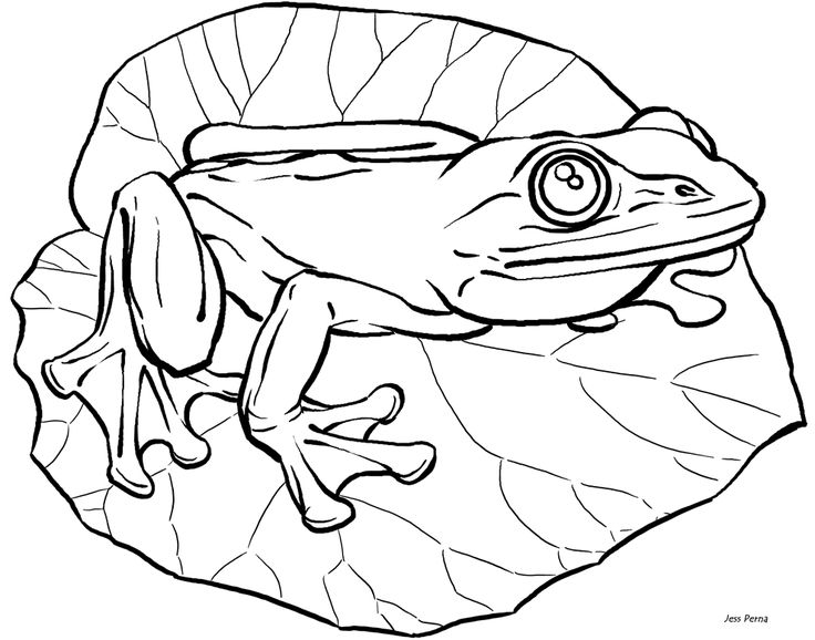 25+ best ideas about Frog coloring pages on Pinterest