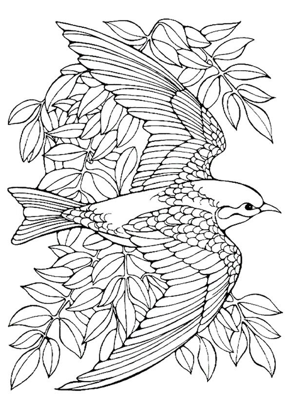 3424 best images about coloring books and embroidery