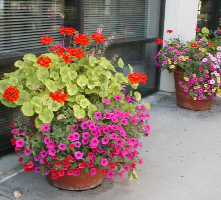 78 Best Images About Outdoor Planters On Pinterest Window Boxes