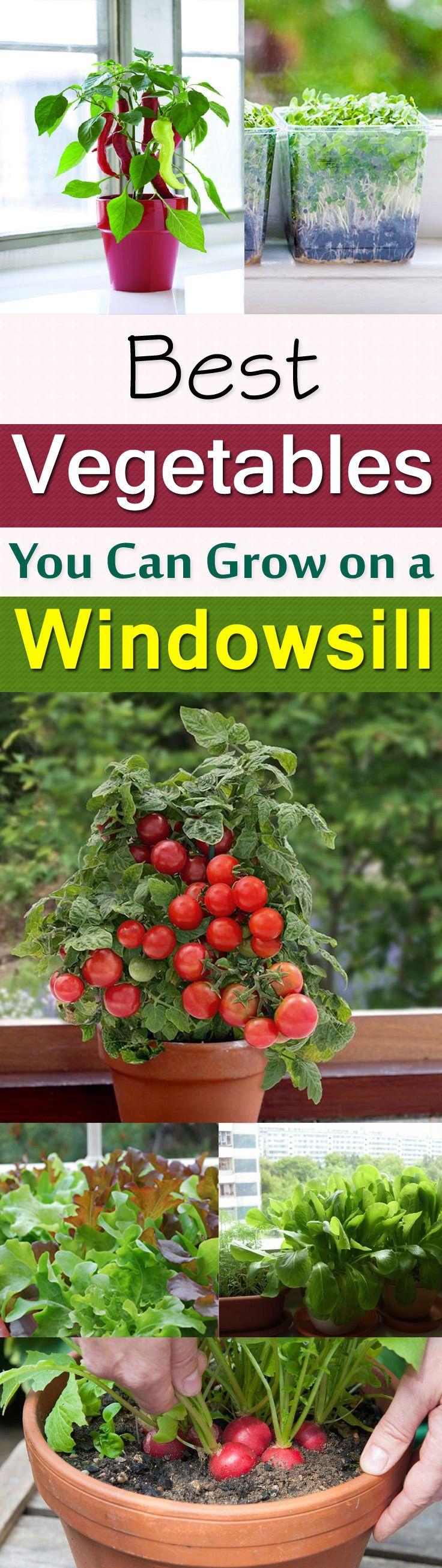 25 Best Ideas About Apartment Vegetable Garden On Pinterest