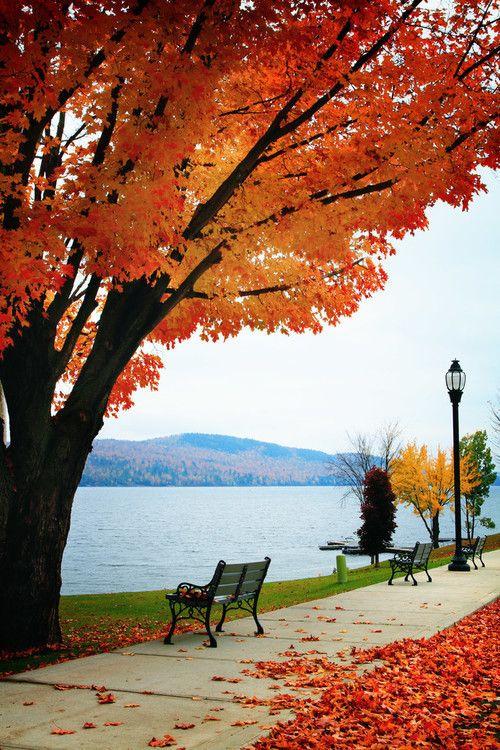 Autumn Falling Leaves Live Wallpaper Best 20 Autumn Scenery Ideas On Pinterest Autumn Leaves