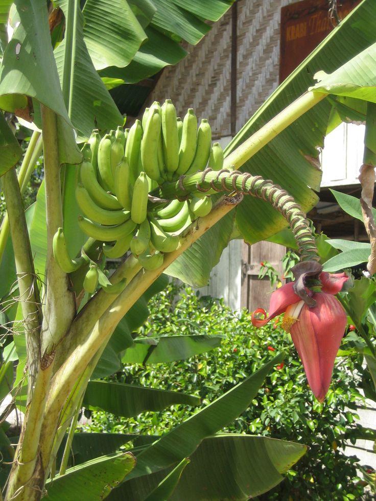 Banana Flower Salad - Resume Examples | Resume Template