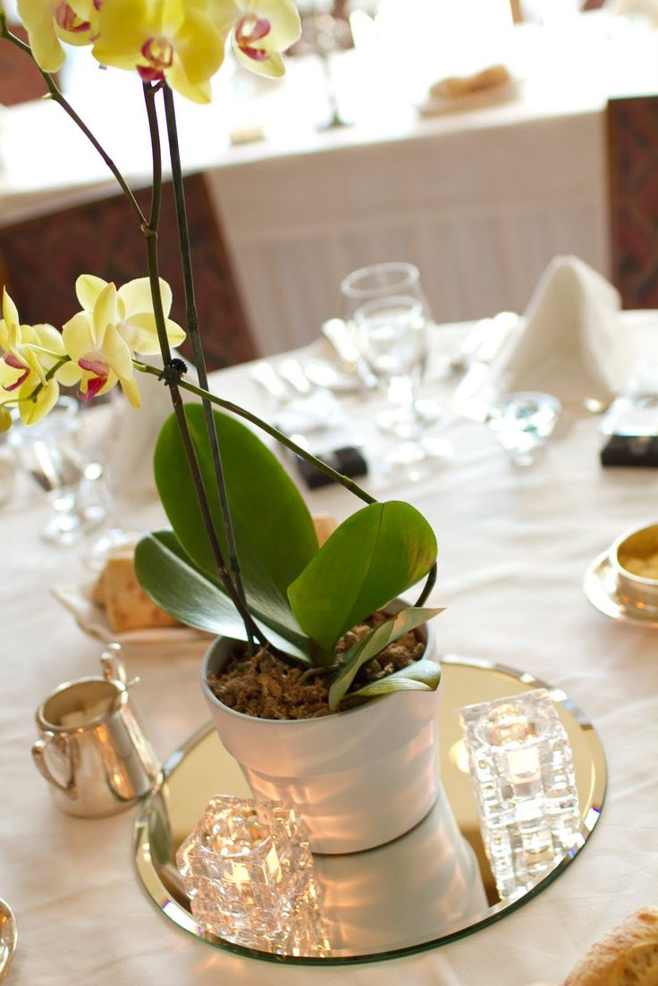 17 Best ideas about Orchid Centerpieces on Pinterest  Tall vases wedding Beach wedding
