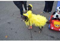 Dog big bird costume | My DIY projects | Pinterest | Big ...
