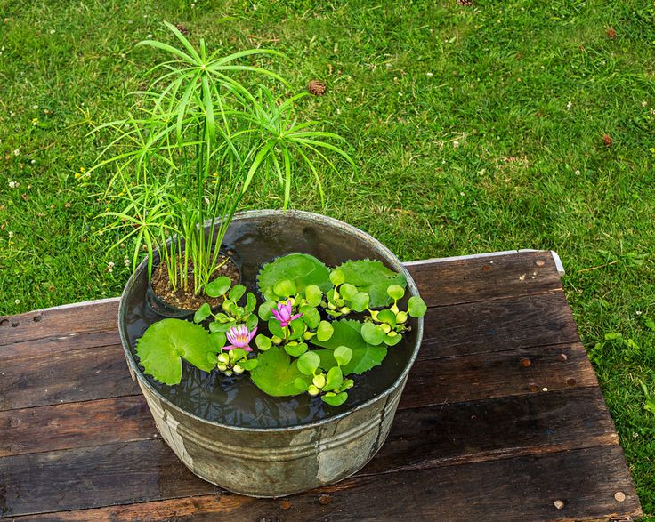 The 25 Best Mini Pond Ideas On Pinterest Small Water Gardens