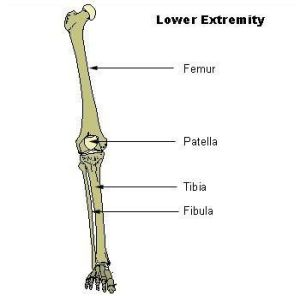 16 best images about Bones in the Leg on Pinterest