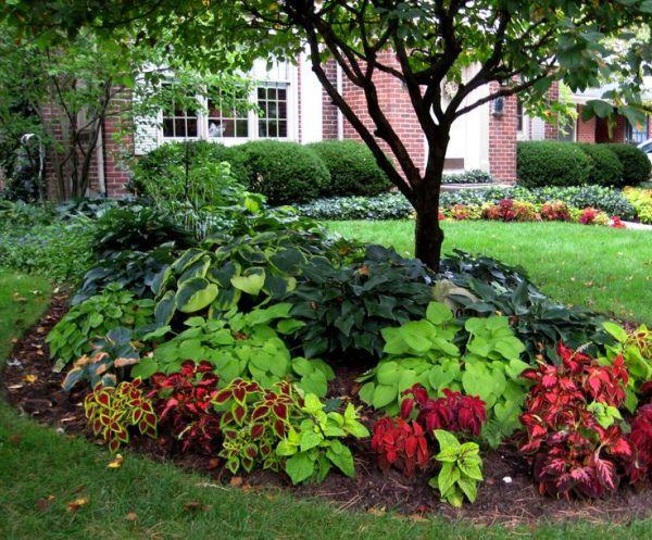 beautiful shade plantings
