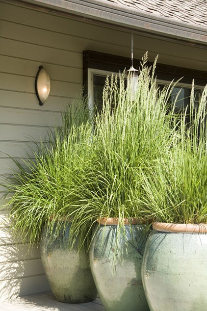 Use large pots and plant with lemon grass LG grows 3 ft high and a foot across acting as a