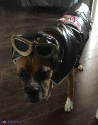 Pet Pilot Costume | Costumes, Homemade and Homemade costumes
