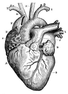 eye anatomy vintage diagram opel corsa b radio wiring best 20+ human heart tattoo ideas on pinterest