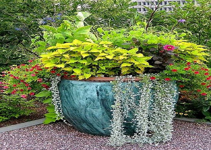 98 Best Images About Flower Pot Gardens On Pinterest Garden