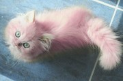 pink kittens perfection