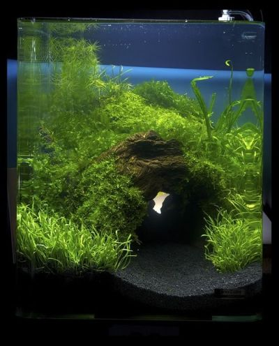aquarium and fish | For the Home | Pinterest | Aquascaping ...