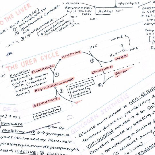 Best 25+ Biochemistry ideas on Pinterest