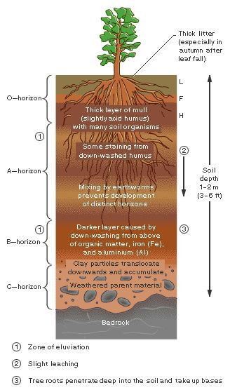 amazon rainforest layers diagram 2007 ford f150 headlight wiring 44 best images about teaching properties of soil (4th and 5th grade) on pinterest   anchor ...