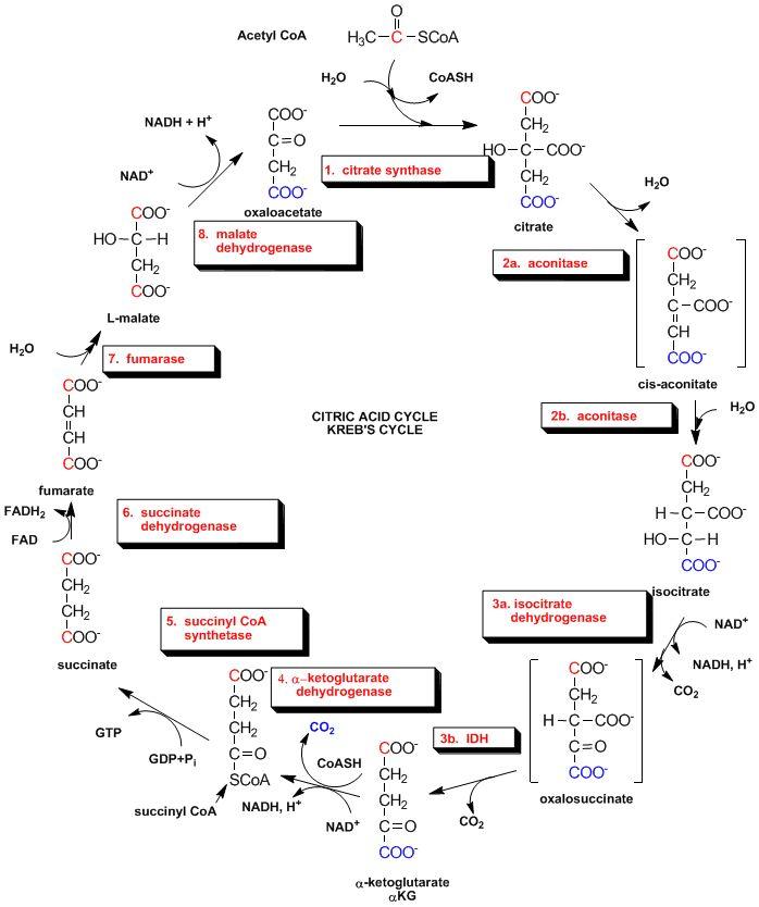 175 best Biochemistry images on Pinterest
