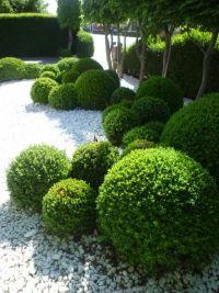 Best 25+ Buxus ideas on Pinterest   Buxus sempervirens ...